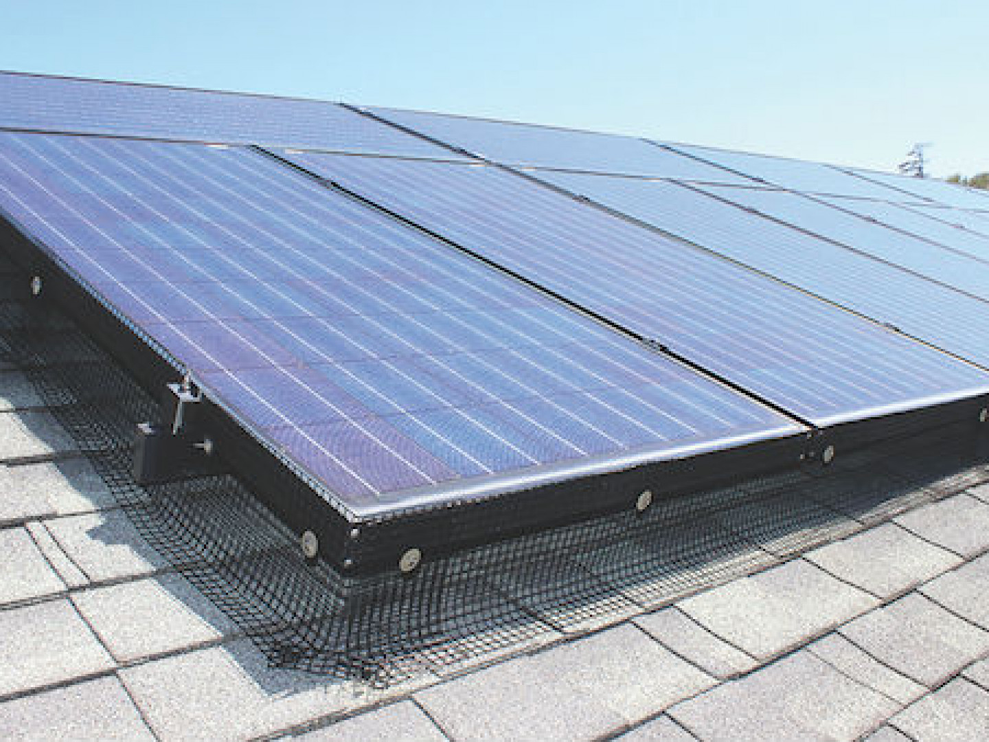 Don't Let Critters Damage Your Solar Panels